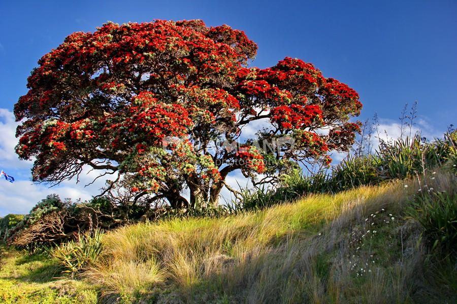 Photos Of Nz Flora Native Plants
